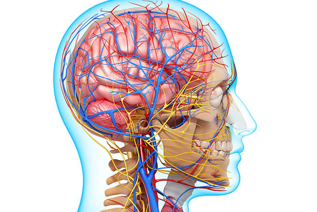 Pós Graduação em Aprimoramento Profissional em Anatomia Geral e Cabeça - Pescoço