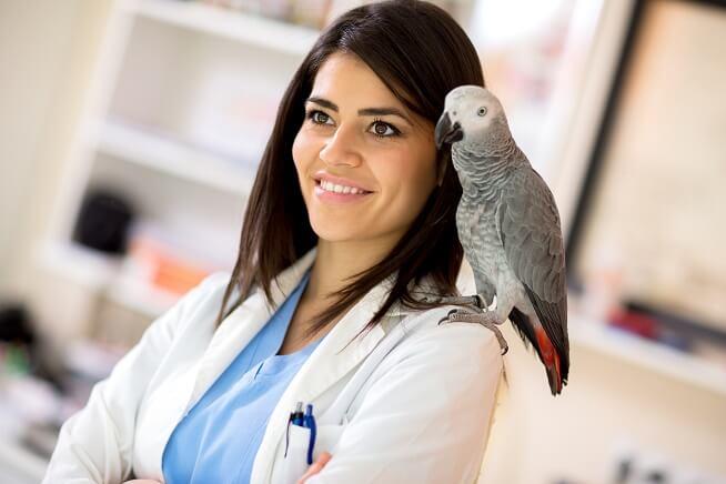 Pós Graduação em Medicina de Pets não Convencionais